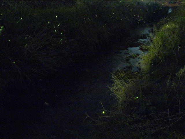 チャリンコで見つけた水路