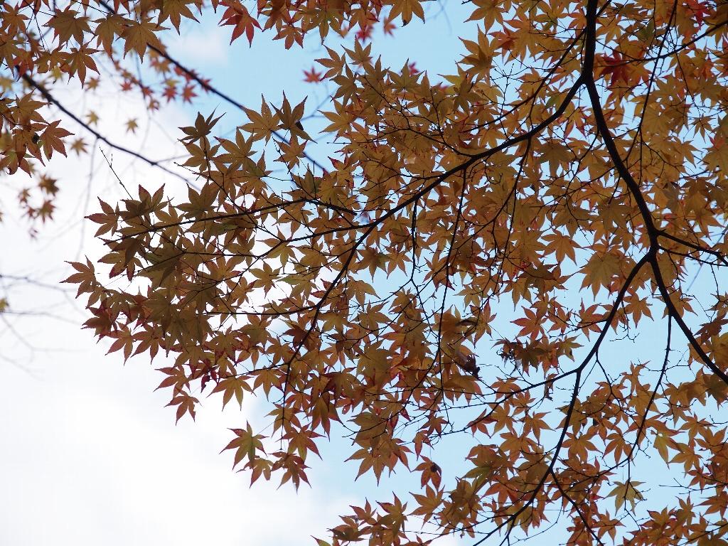 今熊野観音寺その1