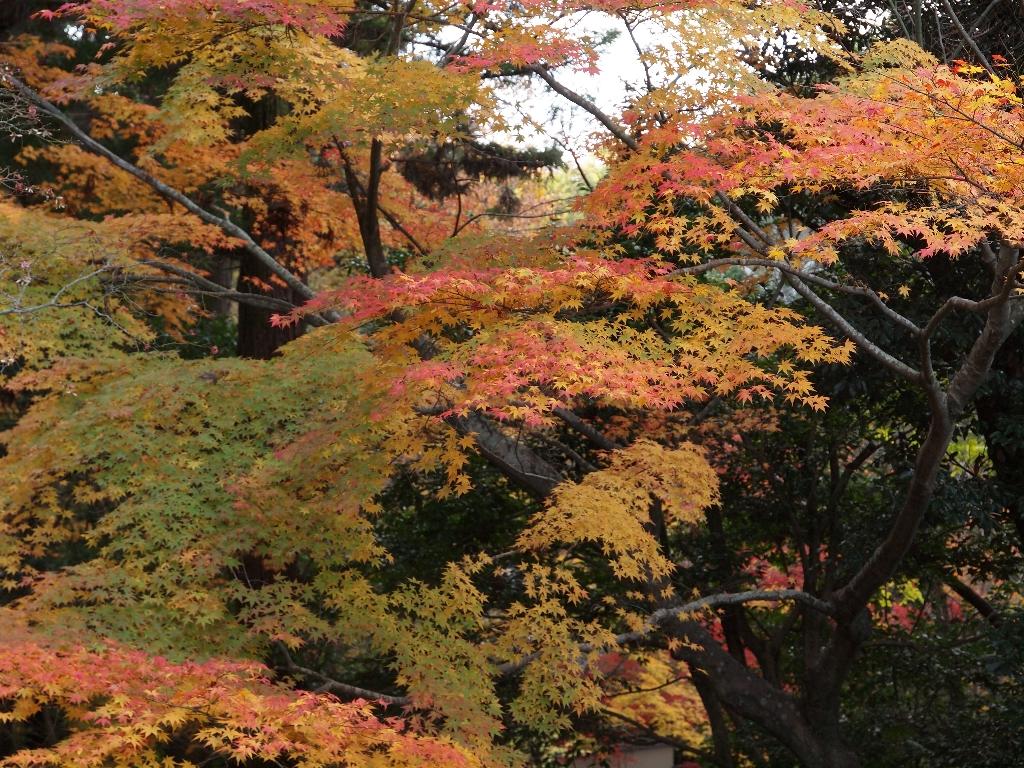 今熊野観音寺その2